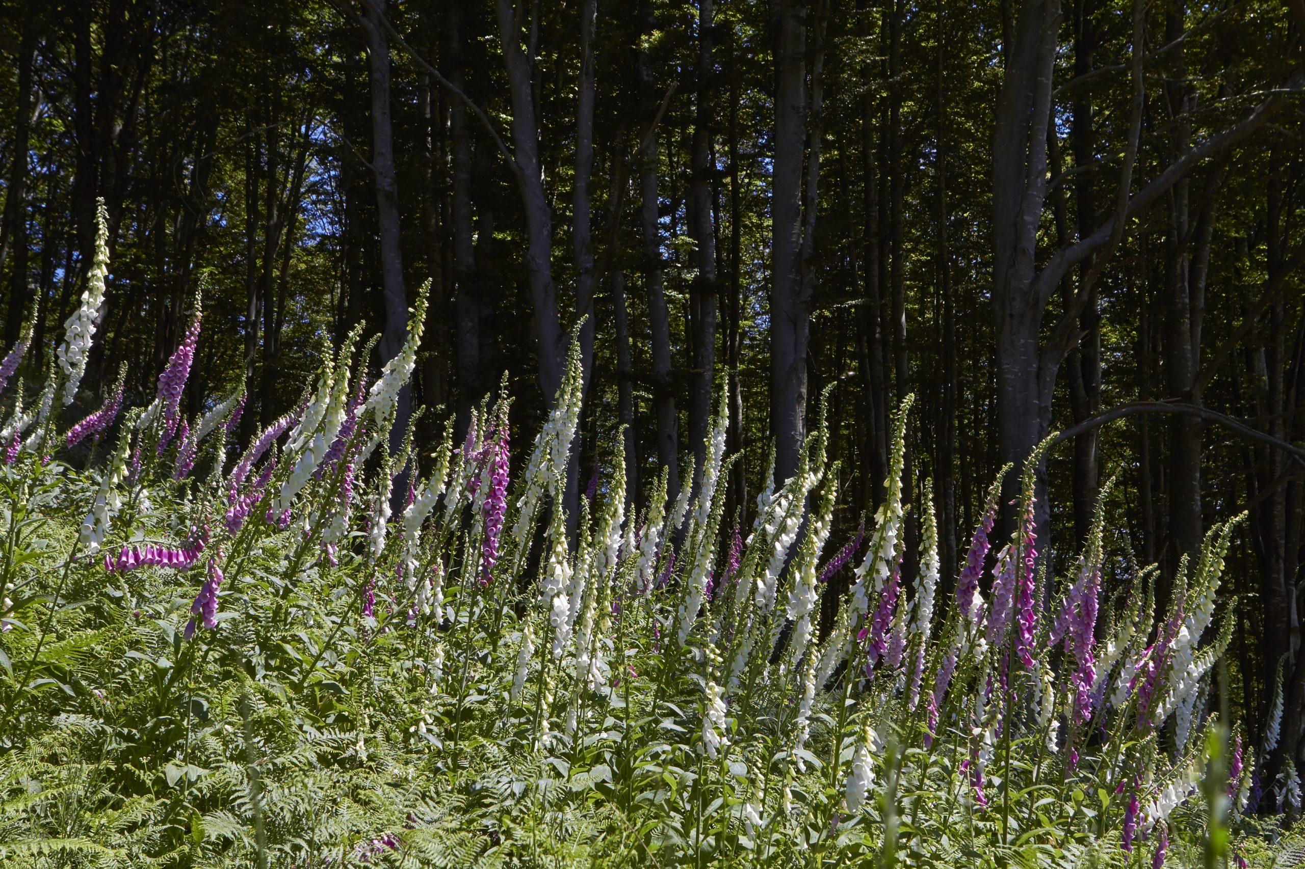 Foresta dell'Acquerino, Riserva Biogenetica Naturale